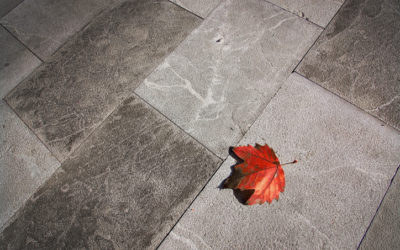 4 Steps to Remove Leaf Stains from Concrete Walkways